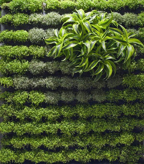 春色满屋 漂亮的绿植墙