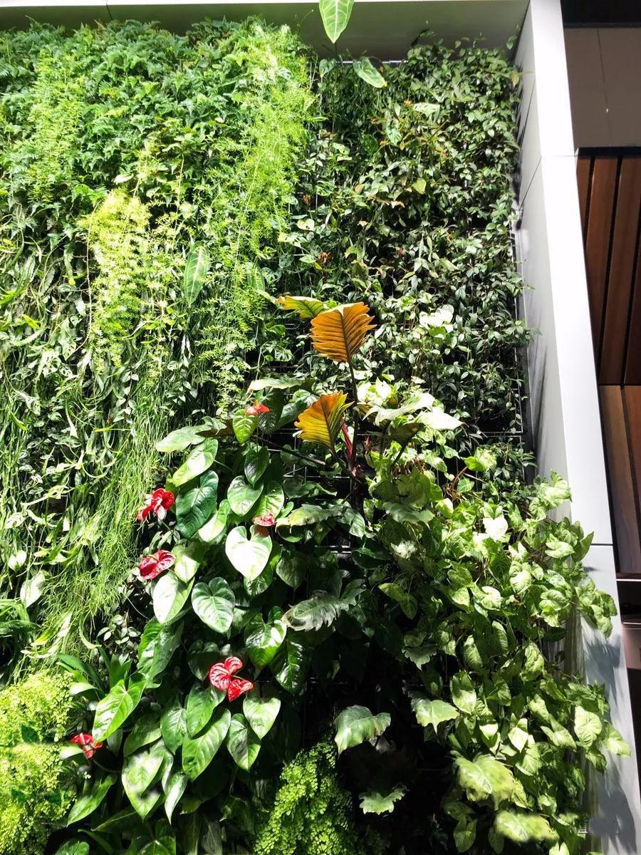 轨道式射灯在植物墙领域的应用,优点特别明显!