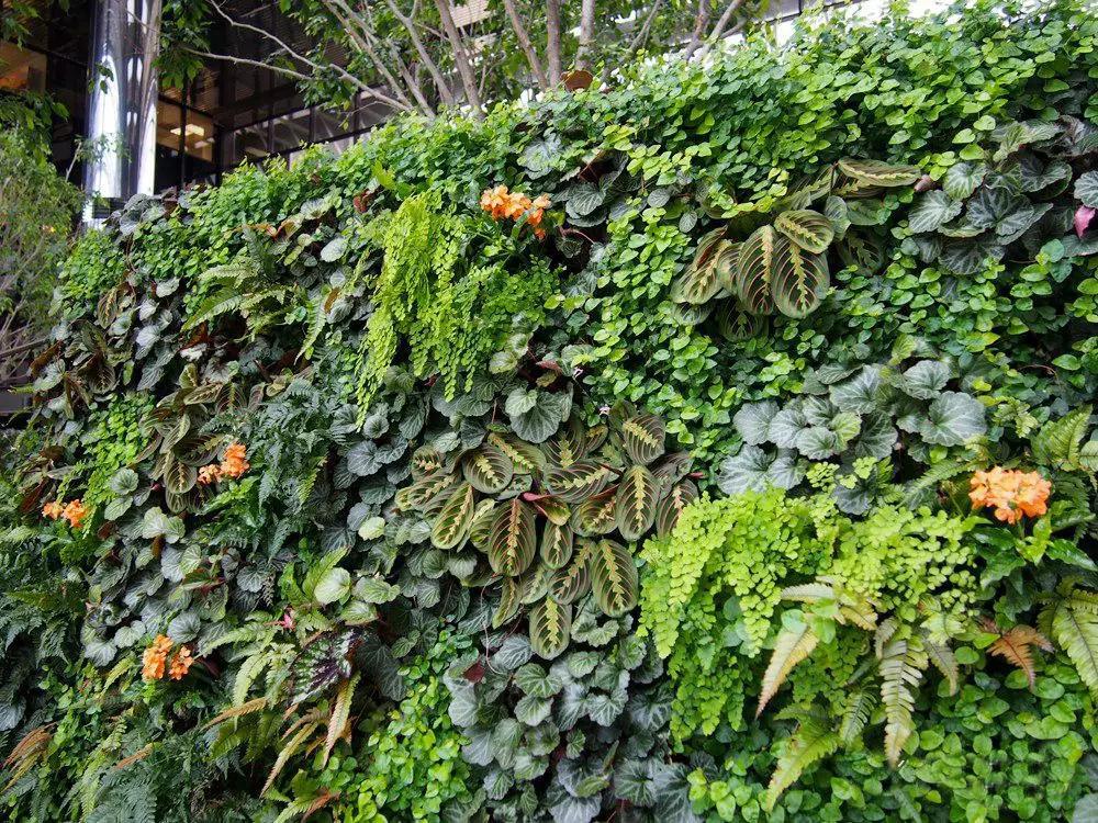植物墙外景内做,打造花园生态酒店成就行业典范!