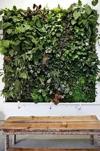 绿色植物墙,净化空气,给你一个美美的家!