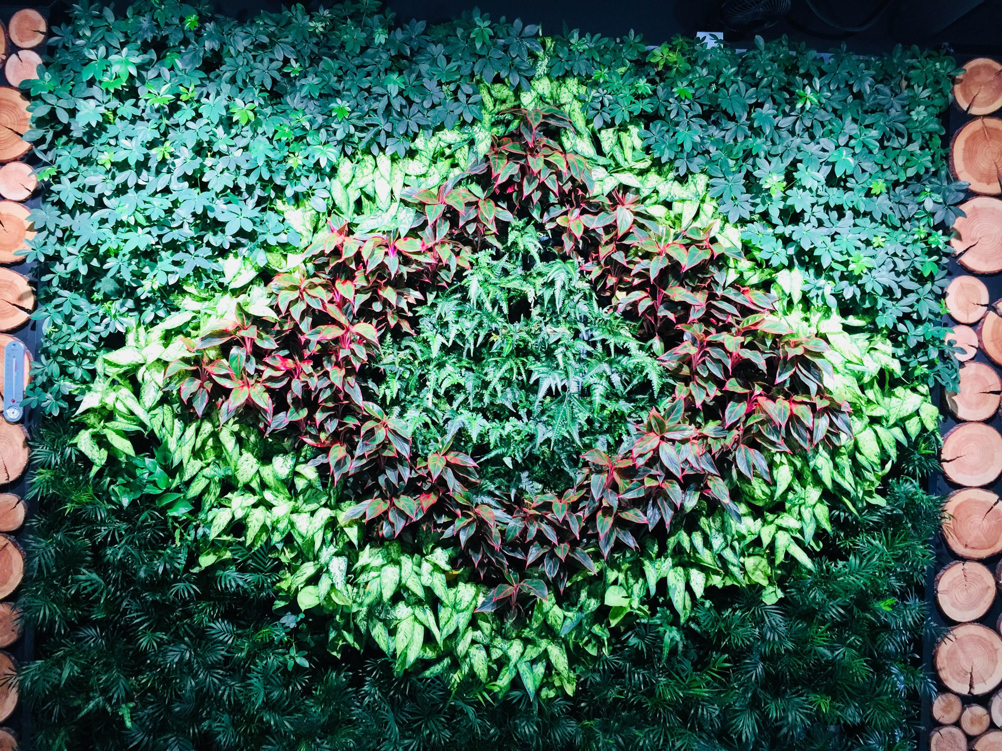 冠孚园艺室内绿植墙