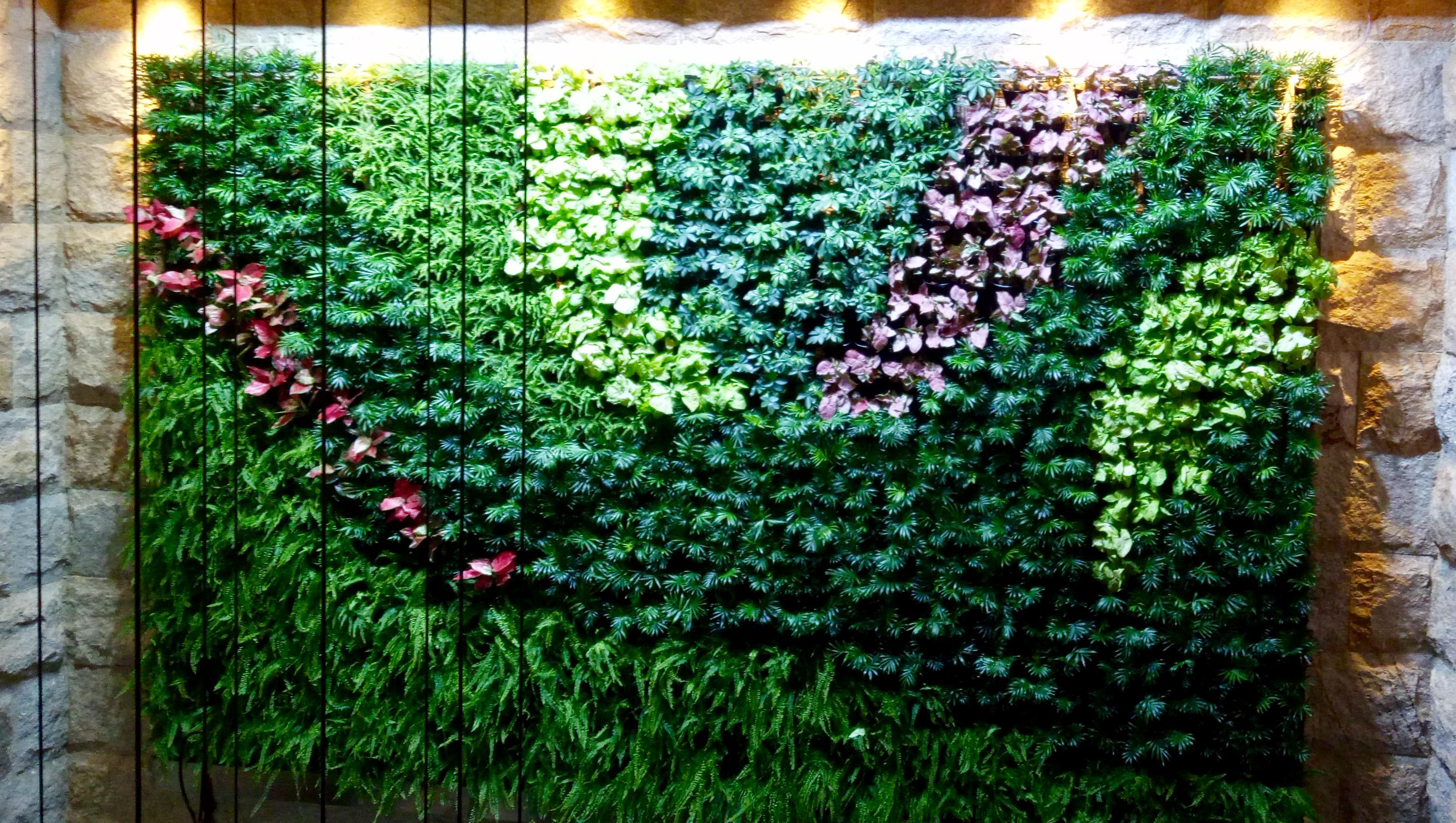 室内绿植墙垂直绿化的实现方法