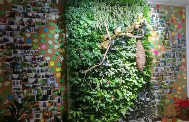 关于植物墙打造者的40条建议,句句良言错过可惜!