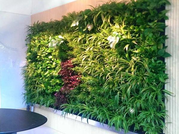 立体绿化植物墙常见的9个问题
